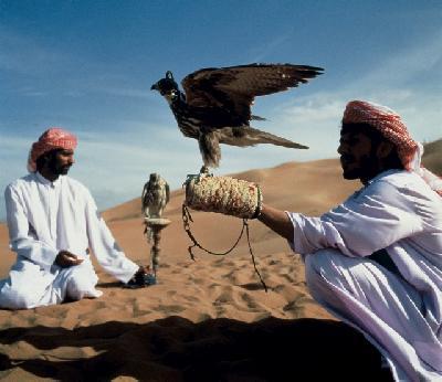 Falkner in der Wüste Dubais