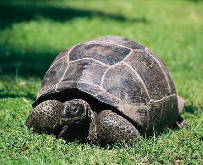 Schildkröte auf Frégate Island