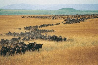 Die große Migration