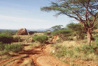 Landschaft im Samburu NP