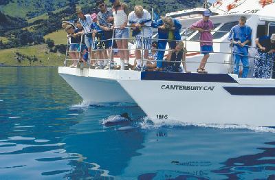 Auf Delfinbeobachtungstour