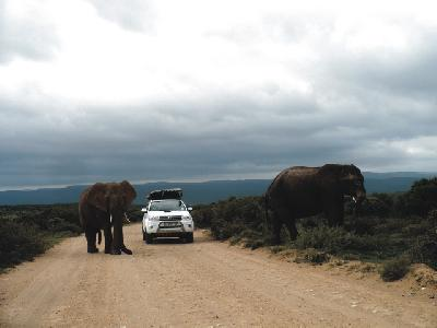 Begegnung im Addo Elephant Nationalpark