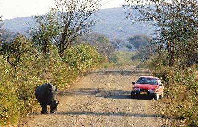 Begegnung mit dem Nashorn