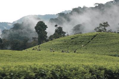 Ruanda Landschaft