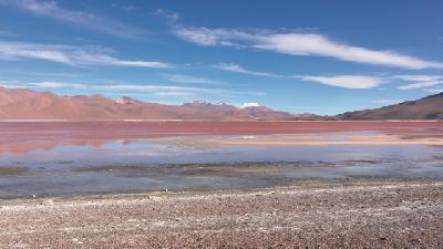 Laguna Colorado im Altiplano