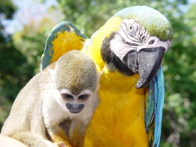 Tiere im Amazonasgebiet