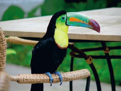 Einheimische Vogelwelt