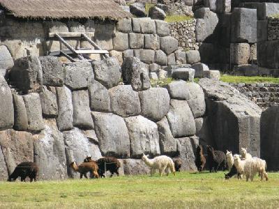 Lamas in Sacsayhuaman