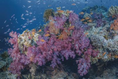 Fiji´s Korallenwelt