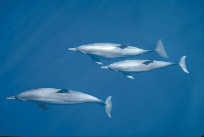 Delfine unterwegs