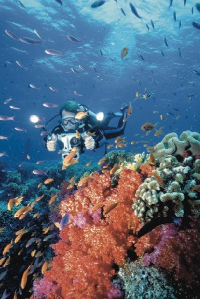 Buntes Treiben Unterwasser