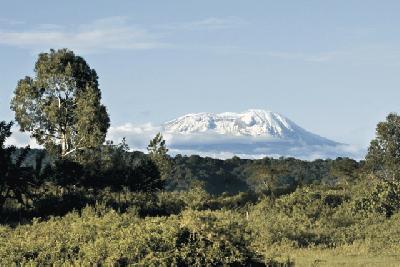 Blick auf die Schneekappe des Kilimanjaro