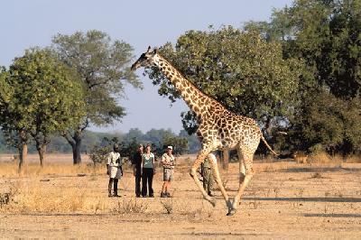 Buschwanderung mit Robin Pope Safaris